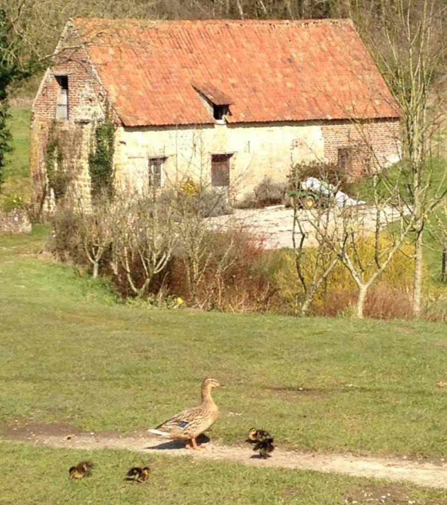 Ducklings and Moulin